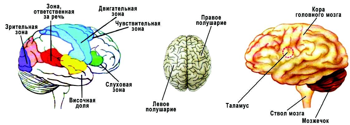 5-ть способов очищения сосудов головного мозга!